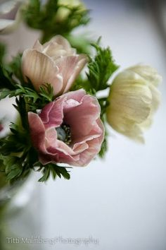 Hellebores are a winter flower in our colour pallet