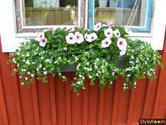 Blommor i balkonglåda