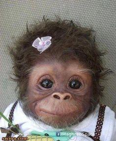 OMG...what a sweet little monkey face.