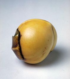 Peach netsuke.  Japan Date: 1800-1900. Ivory with light stainingAsian Art Museum.
