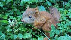 squirrel part 2