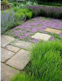 Need to research groundcover that tolerates our climate. The imperfect pavers are perfect.