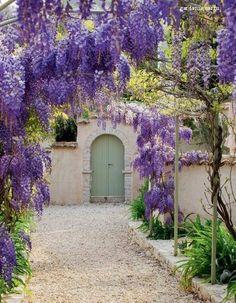 Wisteria garden path.