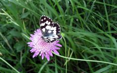 new butterfly pictures | wallpaper, butterfly, flower, high, resolution, world, photo ...
