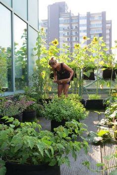 un potager au balcon Vintage Gardening, Education Architecture, Celebrity Travel, Terrace Garden, Growing Plants, Hydroponics, Horticulture, Shrubs, Art Quotes