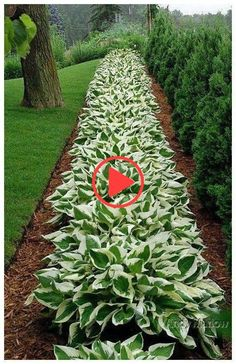 47 simple but beautiful front yard landscaping ideas 14 BestHomeDecors.ml 47 simple but beautiful front yard landscaping ideas 14 Source by BestHomeDecorss Luxury Landscaping, Front Yard Landscaping, Front Garden Landscape, Landscape Design, Abstract Landscape, Landscaping Supplies, Landscaping Ideas, Front Garden Entrance, Front Yard Design