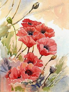 ~Anthony Forster Art Classes: watercolour tuition - Red Poppies Application-3~