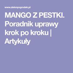 MANGO Z PESTKI. Poradnik uprawy krok po kroku | Artykuły