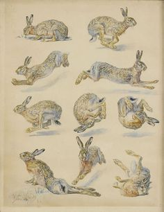 Bruno Liljefors (Swedish, 1860 - 1936) - Studies of Hares, mixed media on paper, 32 x 24,5 cm. 1885