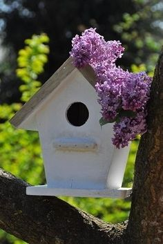 Cute white birdhouse with lilacs