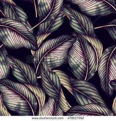 Find Seamless Floral Pattern Tropical Leaves Watercolor stock images in HD and millions of other royalty-free stock photos, illustrations and vectors in the Shutterstock collection. Thousands of new, high-quality pictures added every day. Motif Floral, Illustrations, Tropical Leaves, Damask, Fabric Design, Plant Leaves, Royalty Free Stock Photos, Images, Watercolor
