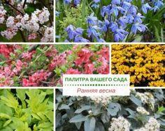 Этой статьей мы начинаем на сайте цикл публикаций, объединенных общей темой «Палитра сезонов в вашем саду»