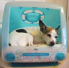 Upcycled Repurposed Bondi Blue Apple MacIntosh iMac G3 Computer Pet Bed for Dog or Cat. $140.00, via Etsy.