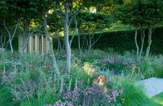 Harpur Garden Images Ltd :: 11mhch291 Gold medal Parrotia persica trees with pale pink and lilac planting soft tones of Salvia and Astrantia water garden building teahouse Design: Luciano Giubbilei The Laurent-Perrier Garden RHS Chelsea Flower Show 2011 UK Marcus Harpur