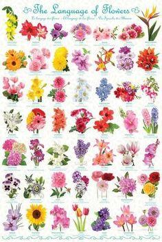 The Language of Flowers Flowers Jigsaw Puzzle Die Sprache der Blumen Blumen Puzzle Edible Flowers, Diy Flowers, Beautiful Flowers, Spring Flowers, Wedding Flowers, White Flowers, List Of Flowers, Orchid Flowers, Fresh Flowers