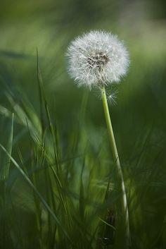 ♀ Bokeh photography green nature