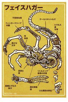 Anatomía extraterrestre