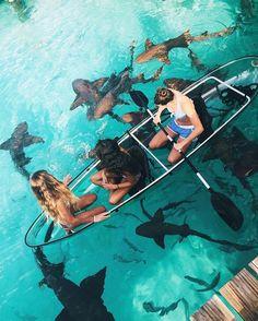 Shark Bait in The Bahamas  Photo by @kkerzner by aroundtheworldpix