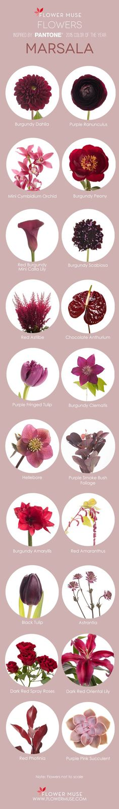 2015 Color of The Year Marsala Flower Inspiration - on Flower Muse Blog: http://www.flowermuse.com/blog/marsala-flowers/                                                                                                                                                                                 More