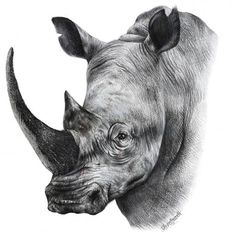 Rhino cool & quirky art print – Miss Lolo African Rhino, African Animals, Wave Drawing, Drawing Skills, Animal Sketches, Animal Drawings, Rhino Tattoo, Rhino Art, Quirky Art