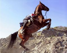 Horse climbing the infamous Cougar Rock at the Tevis Cup 100 mile endurance ride in the Sierra Nevada Mountains.