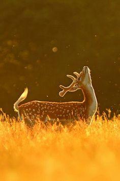♥♥ A little buck for MY Doe! ♥♥