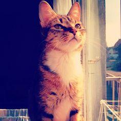 E tudo passa a ficar mais bonito quando eu olho pra você =^.^= #AmoGatos #Gatos