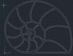 Picture of Draw nautilus outline