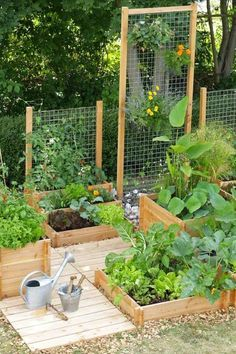 8. Wire trellis is a great option to build a vertical growing garden in a tiny backyard.
