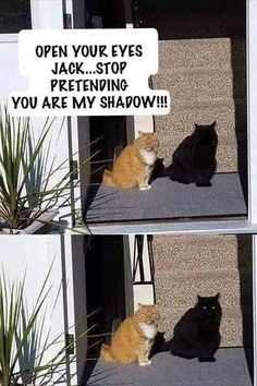 Stop pretending to be my shadow cat - cute animals - # . - Stop pretending to be my shadow cat – cute animals – # Listen - Funny Animal Jokes, Silly Jokes, Really Funny Memes, Stupid Funny Memes, Funny Animal Videos, Cute Funny Animals, Funny Relatable Memes, Funny Animal Pictures, Baby Jokes