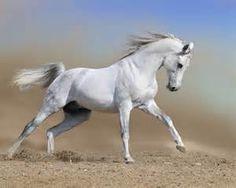 Perfume Review - Amouage Ubar: The White (Floral) Stallion ...