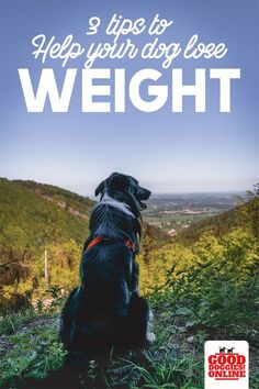 It's not good for your dog to be too heavy. If your dog is overweight, check out these 3 tips to help your dog lose weight. Siberian Husky Facts, Siberian Husky Puppies, Boxer Puppies, Husky Mix, Husky Puppy, Siberian Huskies, Huskies Puppies, Dog Test, Husky Pups