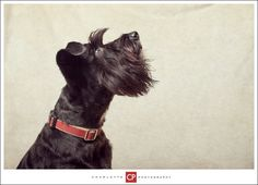See related links to what you are looking for. Somerset, Pet Portraits, Pets, Gallery, Photography, Animals, Photograph, Animales, Roof Rack