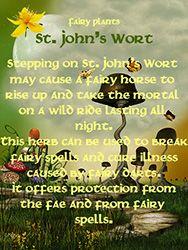 Fairy Plants - St John's Wort