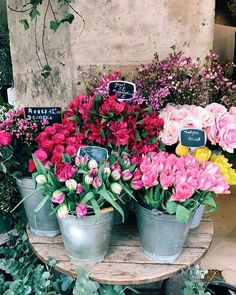 Flowers photography peonies happy New ideas May Flowers, Fresh Flowers, Beautiful Flowers, Exotic Flowers, Purple Flowers, Bloom Where You Are Planted, Flower Market, Flower Shops, No Rain