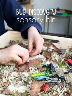 How to set up a simple Bug Discovery Sensory Bin