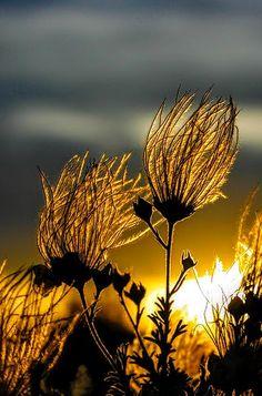 De Flammes & de Fleurs…❀