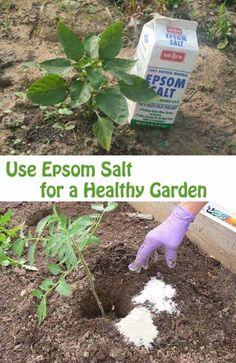 24-Highly-Creative-and-Clever-Gardening-Tricks-to-Enhance-Garden-homesthetics-decor-2.jpg 600×925 pixels