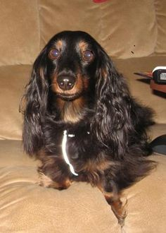 Gorgeous!  Google Image Result for http://www.palsrescue.org/Izzy.jpg