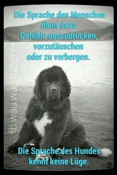 Die Sprache des Menschen dient dazu Gefühle auszudrücken, vorzutäuschen oder zu verbergen. Die Sprache des Hundes kennt keine Lüge. FB.wau.wau.rudeltier