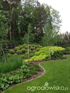 Roztoczańskie klimaty - strona 613 - Forum ogrodnicze - Ogrodowisko