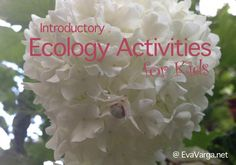 Fun, hands-on lesson plans to engage upper elementary kids in introductory ecology activities.
