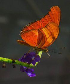 butterflies.....