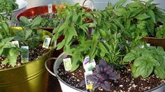 Букет от билки спасява при анемия http://www.zdravnitza.com/a/nav/news/s/s/news_id/6620