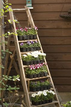 garden use, ladder shelf