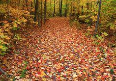Autumn Walk In Ohio