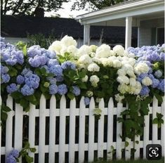 10 Profound Tips AND Tricks: Unique Front Yard Fence Fencing Ideas Shetland Pony.Privacy Fence In Flood Zone Front Yard Fences For. Flower Garden, Amazing Gardens, Garden Fence, Plants, Cottage Garden, Fence Design, Garden Shrubs, Front Yard, Beautiful Hydrangeas