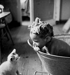 Mid-Century (Curious Kitten naylor 1950)