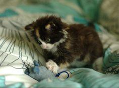 Fluffly little Penelope on www.fluffyorfuzzy.com