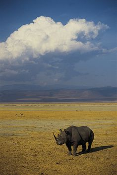 Black rhino, Ngorongoro Conservation Area, Crater Highlands, Tanzania, a UNESCO World Heritage Site by Exodus Travels - Reset your compass